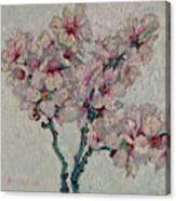 Blossoming Peaches Branch Canvas Print
