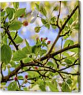 Blossoms And Leaves Canvas Print