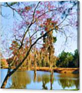 Blossoms And Spanish Moss Canvas Print