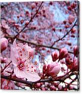 Blossoms Art Blue Sky Spring Tree Blossoms Pink Giclee Baslee Troutman Canvas Print
