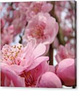 Blossoms Art Print Pink Spring Blossom Baslee Troutman Canvas Print
