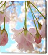 Blossoms Art Prints 52 Pink Tree Blossoms Nature Art Blue Sky Canvas Print