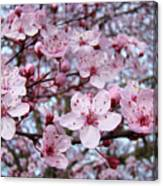 Blossoms Art Prints Nature Pink Tree Blossoms Baslee Troutman Canvas Print