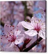 Blossoms Art Prints Pink Spring Tree Blossoms Canvas Baslee Troutman Canvas Print