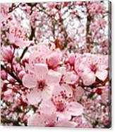 Blossoms Art Spring Pink Tree Blossom Floral Baslee Troutman Canvas Print