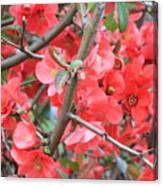 Blossoms Branches And Thorns Canvas Print