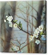 Blossoms In The Wild Canvas Print