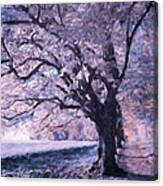 Blossoms In Winter Canvas Print