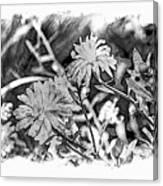 Zinnia Blossoms Canvas Print