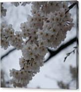 Blossoms Of Dc Canvas Print
