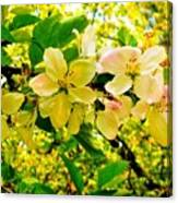 Blossoms Of Sunshine Canvas Print