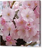 Blossoms On Bark Canvas Print