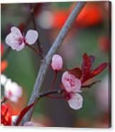 Blossoms Petite Canvas Print