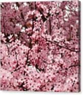 Blossoms Pink Tree Blossoms Giclee Prints Baslee Troutman Canvas Print