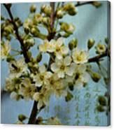 Blossomtime Canvas Print