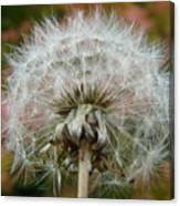 Blowball 2 Canvas Print