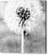 Blowing In The Wind Pencil Effect Canvas Print
