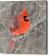Blowing Snow Cardinal Canvas Print