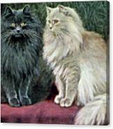 Blue And Cream Persians Canvas Print
