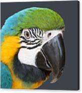 Blue And Gold Macaw Digital Freehand Painting Canvas Print
