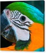 Blue And Gold Macaw Headshot Canvas Print