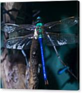 Blue And Green Dragonfly Canvas Print
