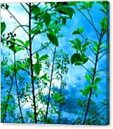 Nature's Gifts Of Blue And Green Canvas Print