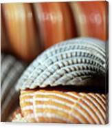 Blue And Orange Seashells Canvas Print