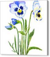 Blue And Purple Pansies  Canvas Print