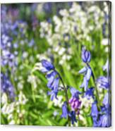 Blue And White Hyacinth Flowers Canvas Print
