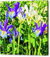 Blue And White Iris Canvas Print