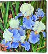 Blue And White Irises Canvas Print