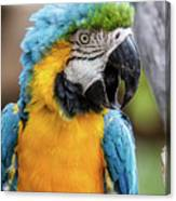 Blue And Yellow Macaw Vertical Canvas Print