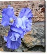 Blue Angel - Iris Canvas Print