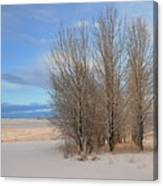 Blue Aspen Canvas Print