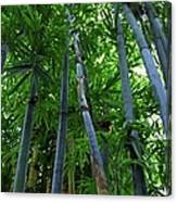 Blue Bamboo Canvas Print
