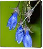 Blue Bells Are Ringing Canvas Print
