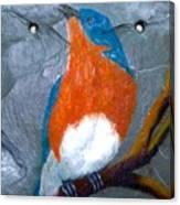 Blue Bird On Slate Canvas Print