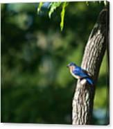 Blue Bird Perched Canvas Print