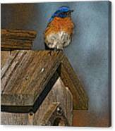 Blue Bird Songs Canvas Print