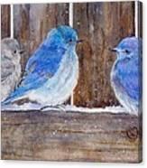Blue Birds Fly Canvas Print