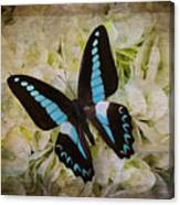 Blue Black Butterfly Dreams Canvas Print