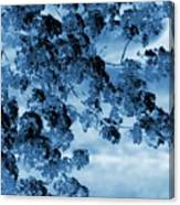 Blue Blossoms Canvas Print