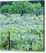 Blue Bonnets,poppies And Willow Tree 2 Canvas Print