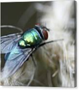 Blue Bottle Fly On Garden Twine Canvas Print