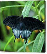 Blue Butterfly II Canvas Print