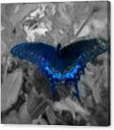 Blue Butterfly In Charcoal And Vibrant Aqua Paint Canvas Print