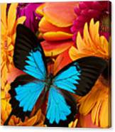 Blue Butterfly On Brightly Colored Flowers Canvas Print