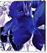 Blue Canna Lily Canvas Print