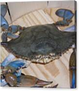 Blue Claw Crab Canvas Print